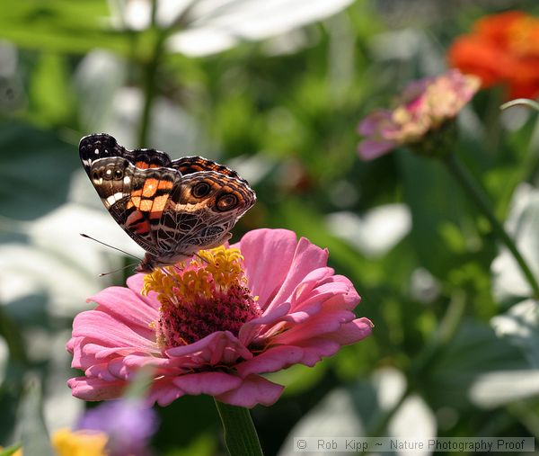 A Gallery Collection Of Different Views Of Butterflies And